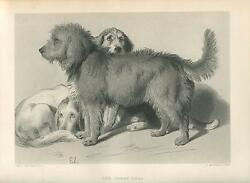 ANTIQUE DOGS BASSETT HOUND BLOOD HOUND SCOTTISH TERRIER DOG PETS LANDSEER PRINT