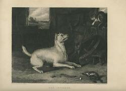 ANTIQUE ENGLISH WHITE TERRIER DOG BARN CAT MOUSE MICE TRAP EDWIN LANDSEER PRINT