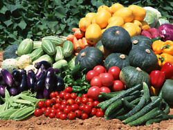 All Variety Vegetable Seeds, Herb Pack, Tomato Pack, Pepper Pack Free Shipping