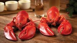 Get Maine Lobster - 15 Live Maine Lobsters 1.1-1.2lb Each W/ Free Shipping