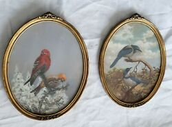 Paintings Rare Pair Birds Artist Signed Louis Saphier Oval In Glass Frames