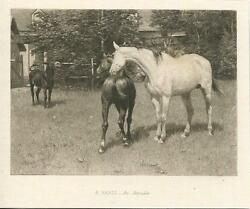 Antique Equestrian White Horse Foal Colt Donkey Trees Yard Fence Miniature Print