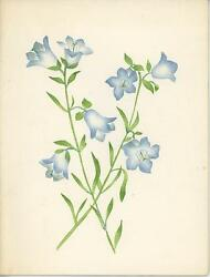 Vintage Bluebell Flowers Theorem Hand Painted Card Gladys Brewster Painting