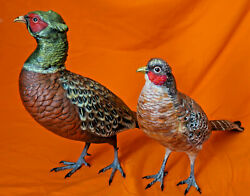 Pheasant Cold Painted Bronze Austrian Pair With Makerand039s Marks 9.5 And 8 Tall