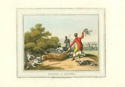 1813 Field Sport Antique Aquatint 'hunting A Panther' Dogs Guns Sg19
