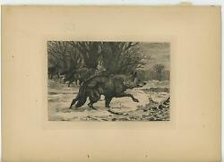 Antique Animals Black Wolves Wolf Pack Forest Nature Original Etching Old Print