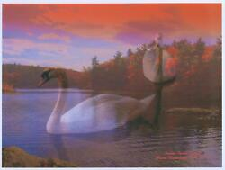 Swans Orange Sky Forest Friends Nature Pond 8.5 X 11 Hand Signed By Artist Print