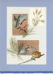 Vintage Fish Fishing Rod Pole Game Bird Ducks Cattails Collage Picture Art Print