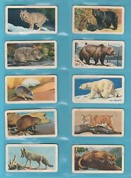 Animals - Brooke Bond Canada - Rare Set Of 48 Animals Of N.a. Cards - 1960