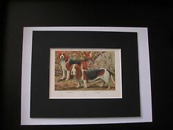 Beagle Basset Hound Dog Print Louis Fuertes Colored Bookplate 1919 Matted 8x10