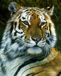 Last Watch Tiger Carl Brenders Limited Edition Print New Sold Out Mint Rare