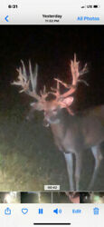 Hunting 2020 Trophy Whitetail Deer Buck Hunts Pa Guided