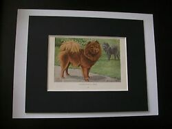Chow Chow Dog Print Louis Fuertes Colored Bookplate 1919 Matted 8x10