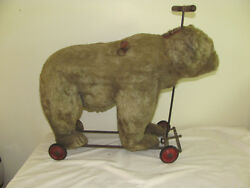 Antique 1928 Steiff Bear W/growler W/button Ear As Found And Rare Large