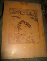 Frank R. Lister Rainbow Trout Catching Fly 15 1/2 X 11 Etching On Copper 1938