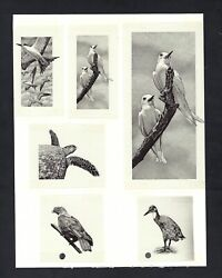 Seychelles Group Of 6 Vignettes Used In 10- 25-50 Rupees 1998 P36-37-38
