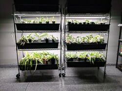 The Orchid Hobbyist Full Spectrum Plus Orchid Leds
