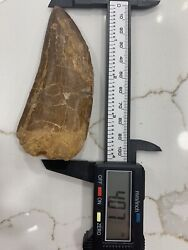 African T-rex  Carcharodontosaurus 🦖 Tooth - 4.07 In. Natural - Real