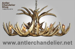 Real Antler Whitetail Deer Oval Chandelier Rustic 8 Lights Lamps Wto-5 Acs