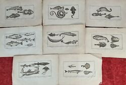 Collection Of 8 Engravings. Huot Direxit. Marine Animals. Xix Century.