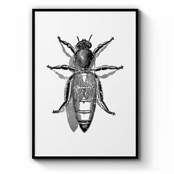 Queen Bee Drawing Insect Honey Wall Art