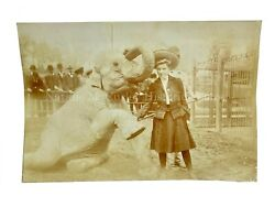 Vintage 1900s Hattie Trained Elephant Nyc Central Park Zoo Photos