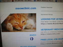 Domain For Sale Meowclinic.com -- Perfect For The Vet In Rochester Minnesota