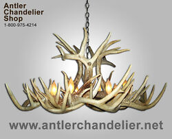 Real Antler Whitetail Xxl Single Tier Deer Chandelier 8-12 Lamps Wtxxl Sngl