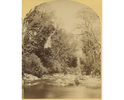 Imperial Stereoview Great Contrast Mint Condition Outdoor Scene Woods Stream