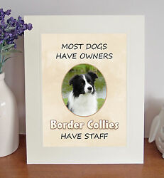 Border Collie 8 x 10 BORDER COLLIES HAVE STAFF Picture 10x8 Dog Print Fun Gift