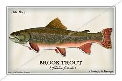 Trout,brook,fly,fishing,flies,fish,angler,lure,reel,salmon,river,creek
