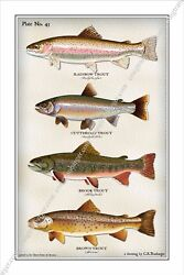 Trout,fly,fishing,flies,fish,angler,lure,reel,salmon,river,creek