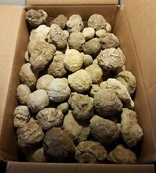 10 Keokuk Unopened Whole Geodes 0.5in Up To 2 Inches In Diameter