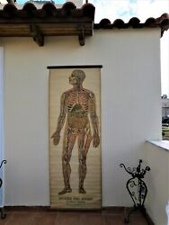 Antique Vintage Life Size Pull Down Human Anatomy Wall Chart Medical Science 79