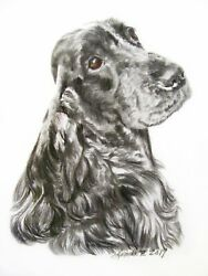 English Cocker Spaniel 8x10 Original matted to 11x14 coloured pencil on Vellum