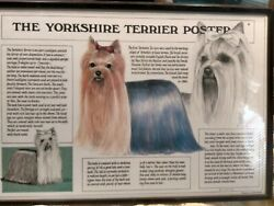 The Yorkshire Terrier Poster Framed 1987 M J Bryan Great Britain
