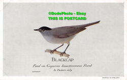R390456 Blackcap. Feed On Caperns Insectivorous Food. In Packets Only