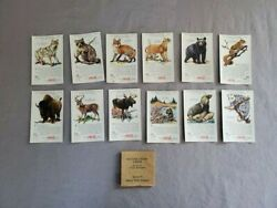 Antique Cocacola 12 Nature Study Cards With Sleeve Series Vi Native Wild Animals