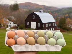 6 Rainbow Chicken Hatching Eggs RARE and **HERITAGE** breeds Fresh and Fertile