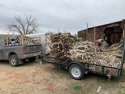 1 Bulk Large Whitetail Shed Antlers Antler Taxidermy Home Decor Dog Pet Chew