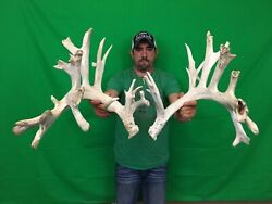 295 Non-typical 8 Plus Lbs Whitetail Deer Antlers Sheds Horns Racks Taxidermy
