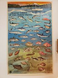 1972 Vintage Poster Marine Fishes Of The North Pacific Noaa Dept. Of Commerce