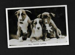 Bull Terrier Puppies from series Dogs by Senior Service Cigarettes card #2