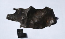 174g Gibeon - Meteorite - Endcut With Recrystallized Areas