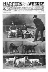 Some Setters and Pointers at the Dog Show    -   1886 Antique Print
