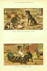 Dogs and Cats   -   2 prints   -   by S. T. Dadd    -  1886