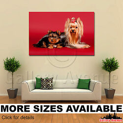 Wall Art Canvas Picture Print - Yorkie Yorkshire Terrier With Puppy M001 3.2