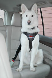 Clix Car Safe Dog Harness L Provides Safety and Comfort For Dogs in The car L
