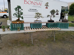 RETAIL BONSAI BUSINESS 4 SALE NAPA: 300+ TREES COMPLETE TRAINING INCLUDED