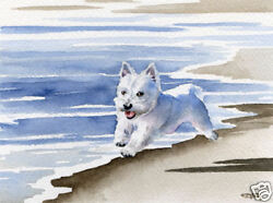 WEST HIGHLAND TERRIER Beach DOG Painting 8 x 10 ART Print Signed by Artist DJR
